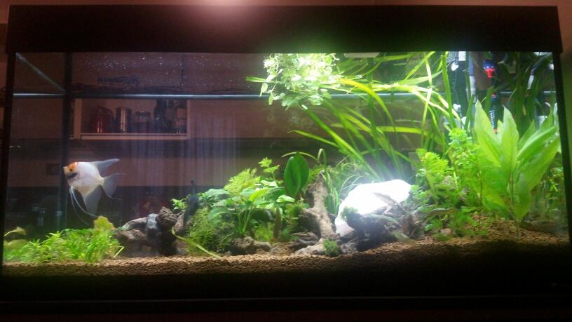 Npk pmdd forum acquariofilia facile allestimento e for Legni per acquario